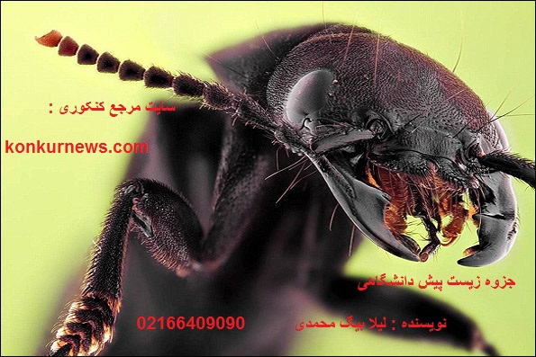 جزوه زیست پیش 2 نوشته شده توسط لیلا بیگ محمدی دانشجوی داروسازی دانشگاه شهید بهشتی